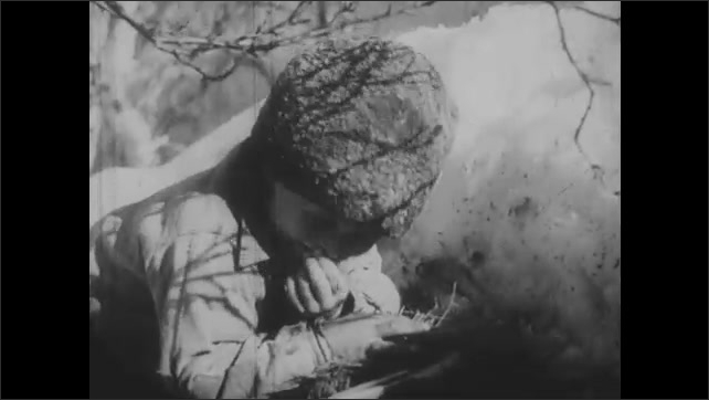 1950s: Grouse mingle on forest floor. Young boy peeks over ridge, looks at birds. Boy retreats behind ridge, puts fingers in mouth.
