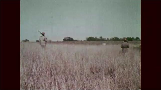 1960s: Grass rustles. Bird flies up out of grass, man shoots bird. Dog runs across field. Man takes dead bird from dog's mouth.