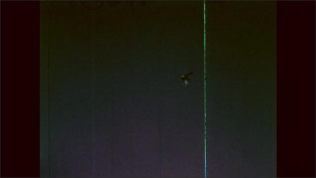 1960s: Men hide in grass, aim weapons. Duck flies through sky. Man blows duck whistle.