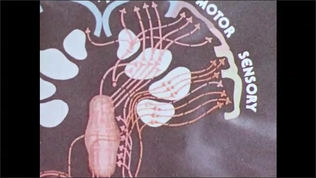 1980s: Man walks barefoot towards tack on ground. Animation of nerves cells in brain sending signals. Man steps on tack.