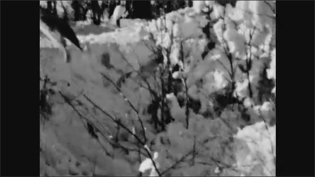 1940s: UNITED STATES: river in winter. Bird flies in snow. Birds under snow. Sharp Tail Grouse hide under snow.