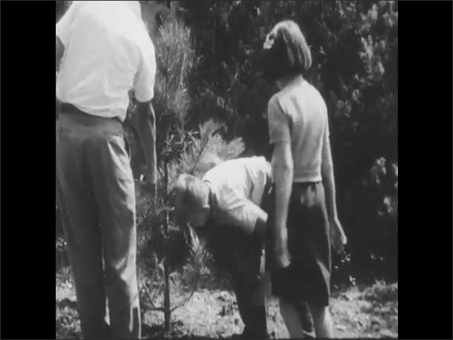1950s: Man and boy in forest. Boy points to tree. Man hands boy bacon. Boy hangs bacon from branches of tree. Man hands girl bacon to do same.