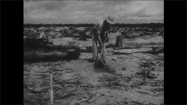 1940s: Bulldozer pushes dirt and constructs roadway. Dirt curls under bulldozer blade. Man digs hole in ground with hoe. Hands plant seeds. Hand uses knife to gouge sapling.
