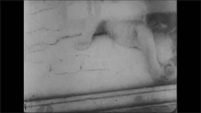 1930s: Woman's feet walking dog on sidewalk. Close up of cat in window. Cat eating on sidewalk. Cat walks across sidewalk. Pigeons on roof, fly away.