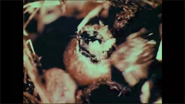 1950s: Bee emerges from cocoon.