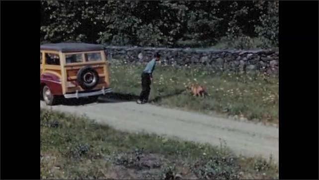 1950s: Dog chases car.  Car stops.  Young man throws rocks at dog.  Dog is hit by car.
