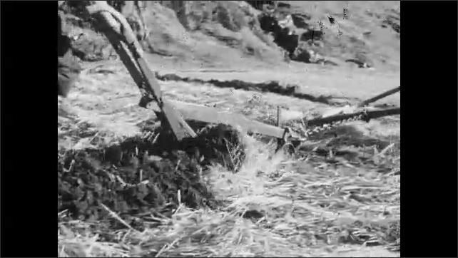 1950s: Horse plows field.  Man walks and holds reins.  Children work in field.  Farm.