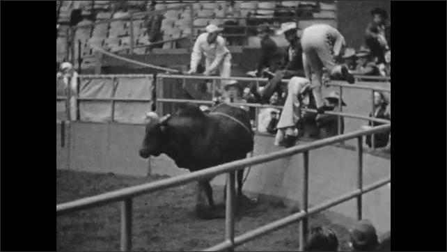 1950s: Man rides bull in arena, falls off. Matador leads bull away.