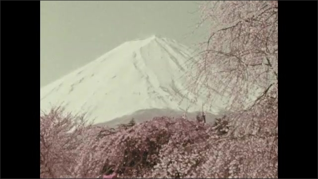 1960s:  View of mountain peak. Waves hitting beach. View of beach, mountain in background. View of mountains. Blossoms on branch. Close ups of blossoms. View of mountain, trees.
