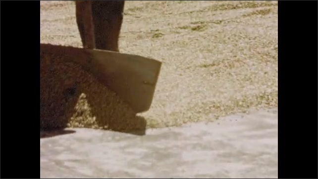 1950s: UNITED STATES: coffee beans in watering trough. Men split coffee beans and dry them in sun. Water sprayed across banana plantation