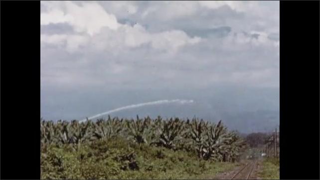 1950s: UNITED STATES: water spray across banana plantation. Surface canals and irrigation on banana plantation