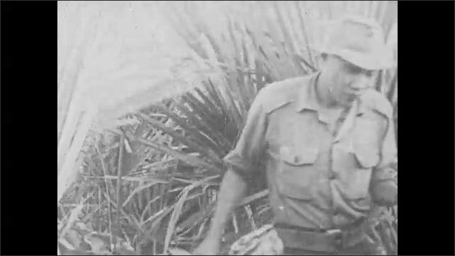 1960s: Viet Cong soldiers sit in jungle, prepare explosives, walk through dense vegetation. Men work, pull ropes, swing sledgehammers.