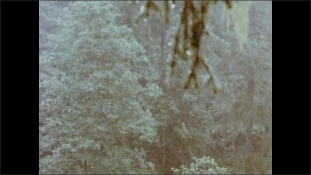 1960s Alaska: Pine and deciduous trees in forested hills. River runs through pine forest. Sea gulls gather on shore of river in forest.