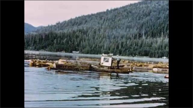 1960s Alaska: Men drive small tugboat on river toward logs. Tugboat pushes against logs in river.