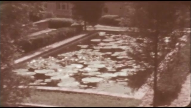 1940s: Statue and steps in garden. Lily pond. Lily pads and flowers.