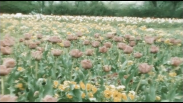 1940s: Field of flowers.
