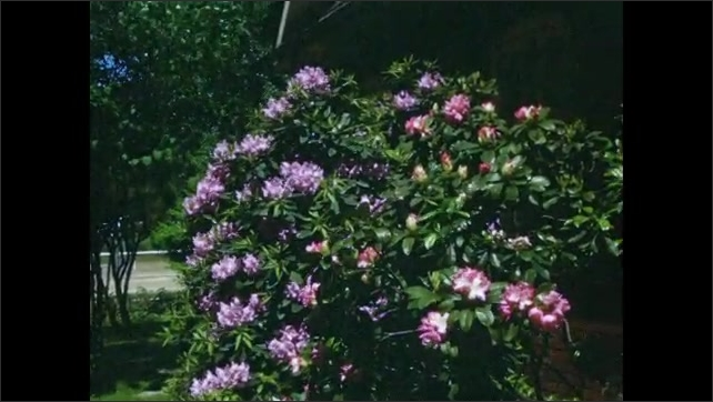 1940s: Purple flowers in a garden. Leaves move in the wind, purple flowers. Red flower with green leaves. Pink flower. Boat with text ????V 24 MOHICAN???? water flows on the left.