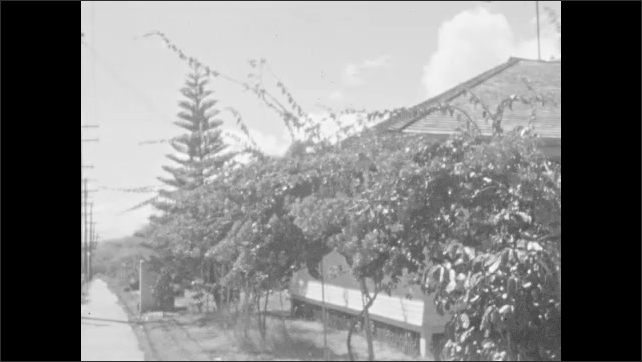 1930s: Large institutional building in distance. Hedgerow, garden. Sprawling vines wave in breeze, Norfolk Island Pine, building, road line with power poles. Lily pads float, ferns sway.