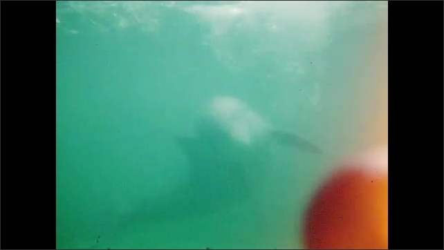 1950s: UNITED STATES: diver in metal suit. Dolphin in water. Underwater view of dolphin