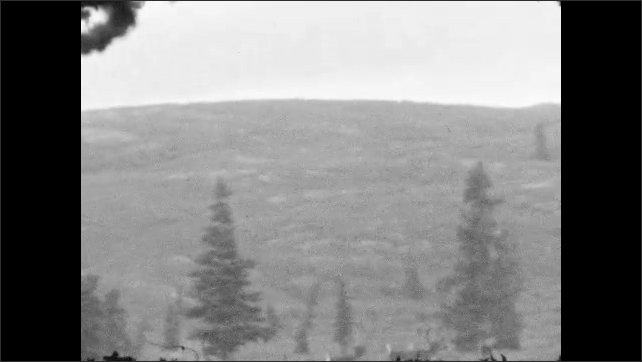 1920s: Caribou herd runs across grassy hill. Three men stand together, smile and laugh. Two men are in leather jackets, all appear outdoorsy.