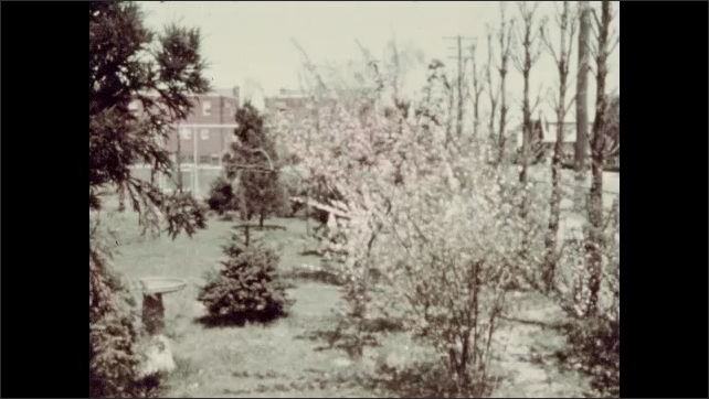 1930s: UNITED STATES: lady in garden. Lady smiles at camera. Lady sat on bench. Lady walks between trees.