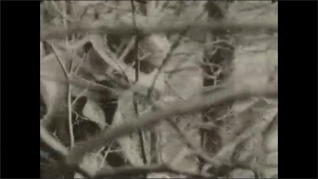 1920s: River.  Man walks through forest.  Man holds camera and plays with dog.