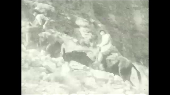 1920s: Group of people sit on mules on a narrow trail next to rocky mountainside. People ride mules up a narrow trail. Canyon. A narrow canyon trail.