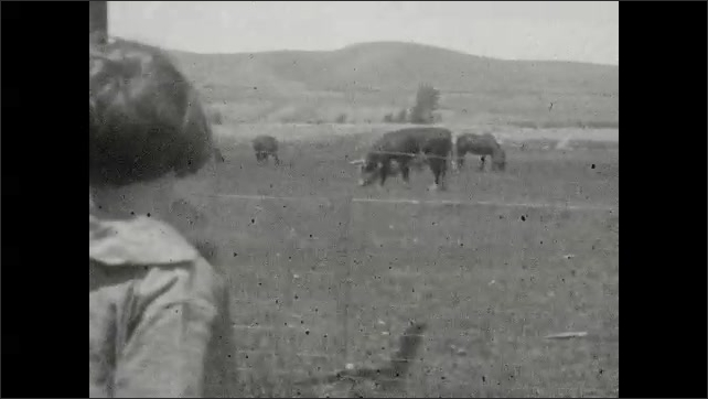 1930s: Car drives down road.  Little girl watches cattle.  Sheep.