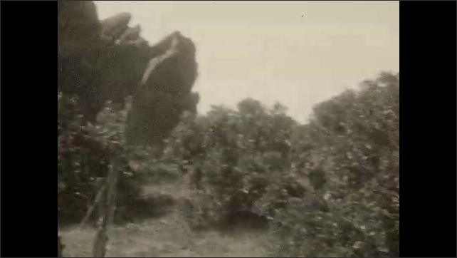 1930s: UNITED STATES: Car registration plate. Rock features in landscape. Tree by road. Road through landscape