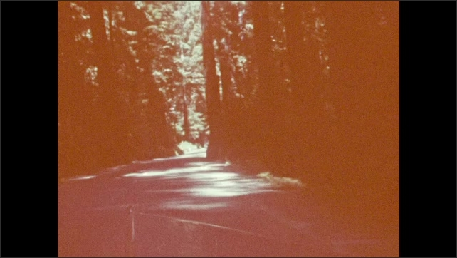 1940s: UNITED STATES: view through windscreen of car during drive through forest. View of hedges by road. Trees by roadside.