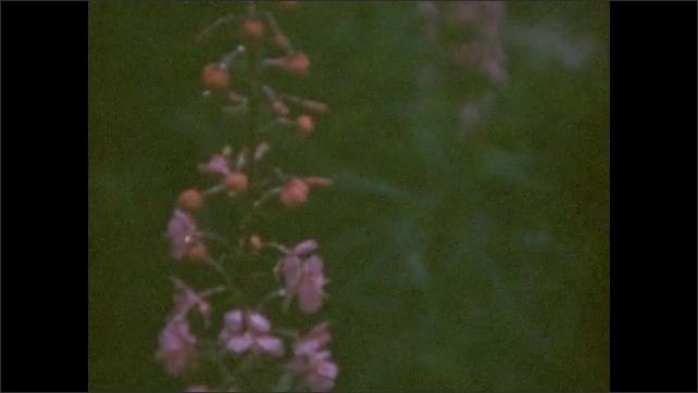 1940s: UNITED STATES: glacier sign post. Mountain flowers. View through metal bridge.