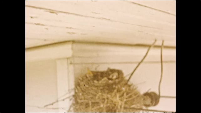 1940s: UNITED STATES: car drives along road. Birds in nest. Ladies in dresses