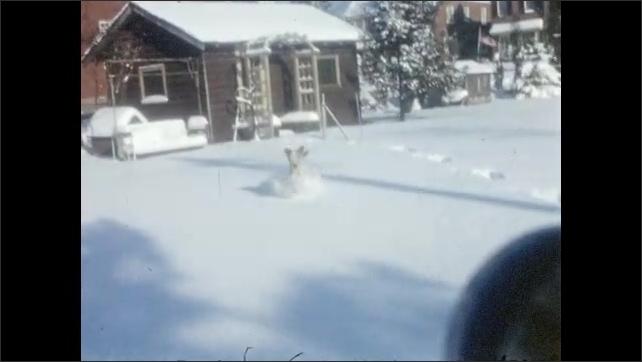 1940s: Snowy residential neighborhood. Dog runs through the snow.