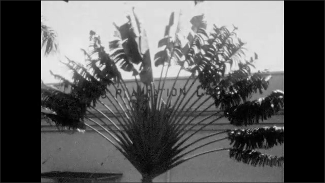 1920s: Worker places bundle of sugarcane in water channel to wash it. Palm tree in front of Plantation building. Ocean waves on the shore.