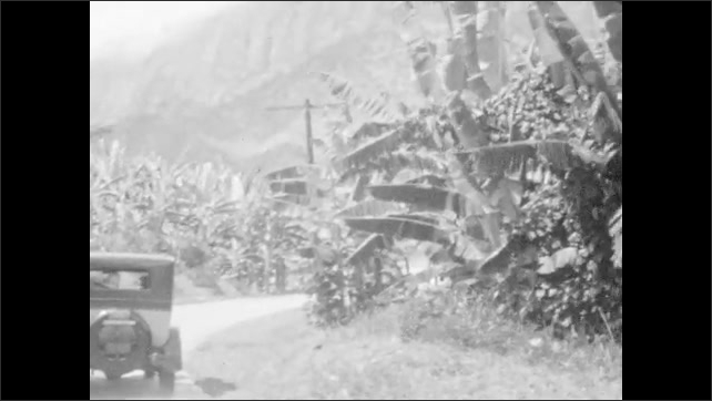 1920s: A woman and boy play with a bird in a cage. A car parked among banana trees. A bunch of bananas growing in a tree.