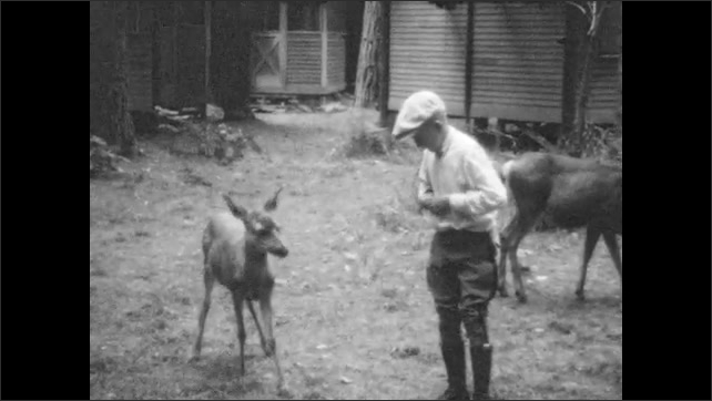 1940s: Campground.  People feed and pet deer.