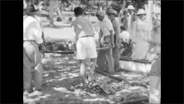 1930s: Man pulls bundles out of ground, loads onto large platform, men carry platform away. Men sit and prepare food. Men stand and prepare food.