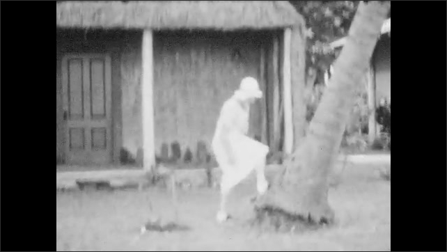 1930s: Women play ukulele and one woman sings. Young girl climbs a palm tree and falls, palm tree leaves.