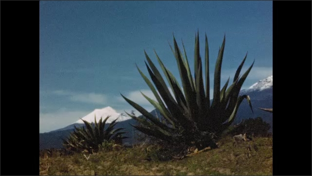 1940s: Pan to close up of flowers. Pan of agave plants, mountains in background. View of mountain. Girl posing by plant.
