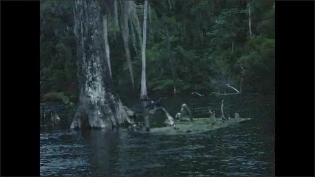 1940s: Boat moves through marsh.  Birds.