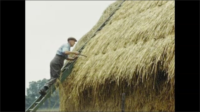 1950s: EUROPE: thatcher builds new roof on cottage. Man thatches straw roof. English countryside cottage.