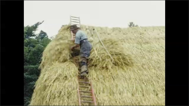1950s: EUROPE: ladder on straw roof. Man carries straw up ladder. Thatcher builds roof.