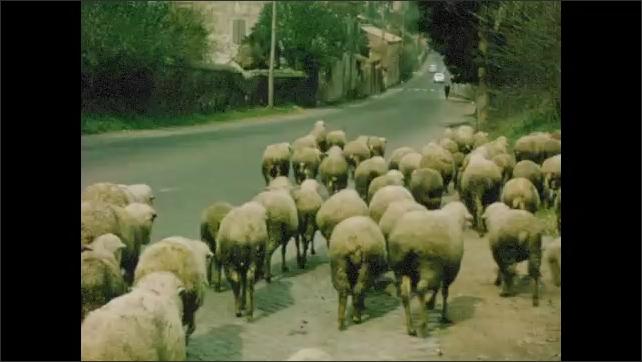 1960s: Policemen on roadside. People and cars travel along street. People herd sheep down road.