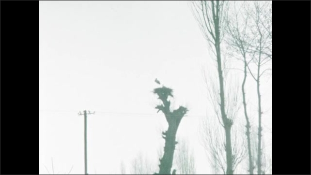 1960s: Mountains. Person walks down road with animal. Countryside, trees. Building. Flag.