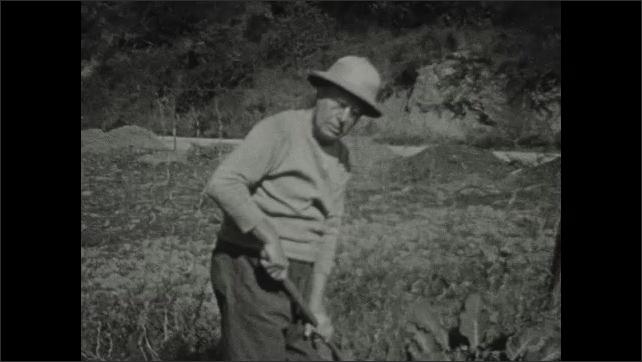 1930s: Old man works in garden.