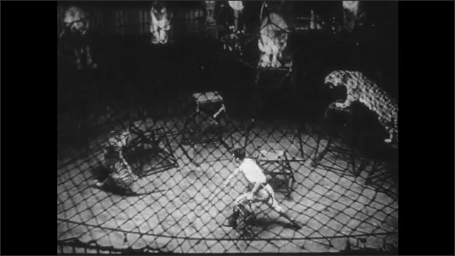 1950s: UNITED STATES: man hoses animals in cage. Trainer flicks whip. Tigers and lions in ring. Tiger leaves cage. Boy trains lion cubs
