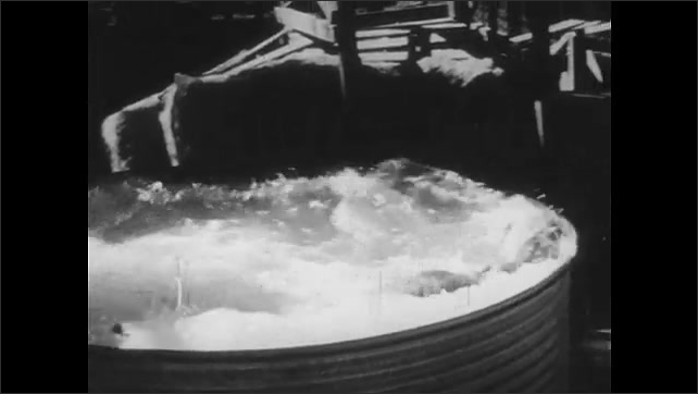 1950s: UNITED STATES: man washes lion with soap. Lion jumps into pool of water. Tiger in ring