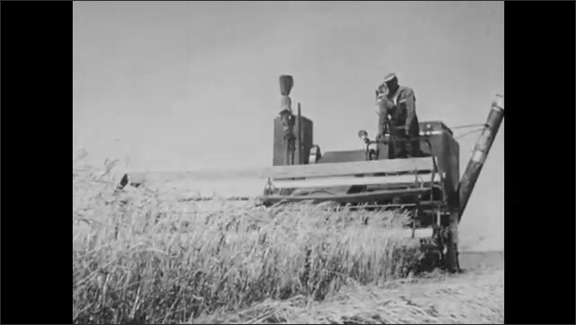 1950s: Wheat fields of the prairies. Combine tractor goes down the rows of the wheat farm.