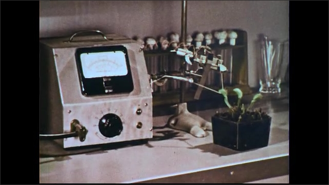 UNITED STATES 1950s: Man in lab, sets plant on counter / Plant next to electrical measuring equipment / Hand touches plant / Plant next to equipment / Close up of gauge / Man talks into camera.