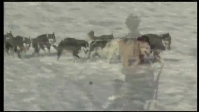 2000s: UNITED STATES: man and boy go mushing across snow in Alaska. Dogs pull sledge across snow.